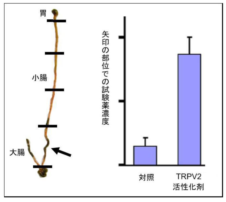 図3活性化剤.jpg