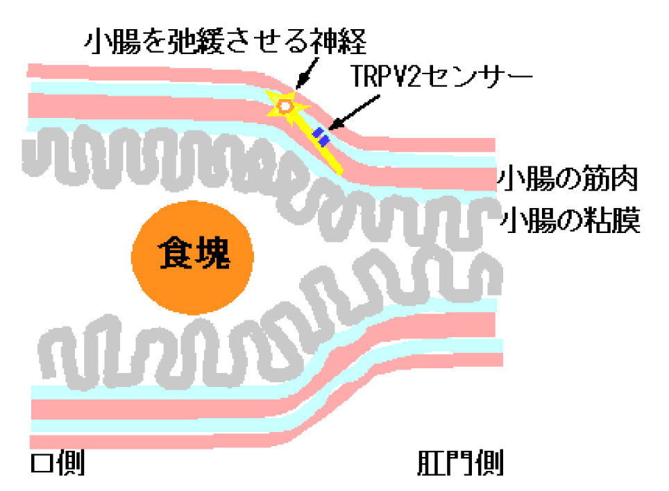 富永概略図.jpg