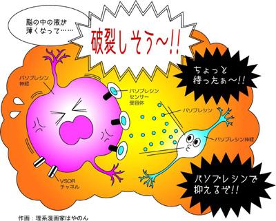 岡田図4.jpg