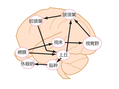 視覚2.jpg