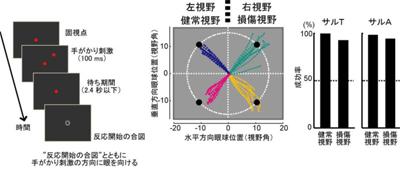 視覚4-1.jpg