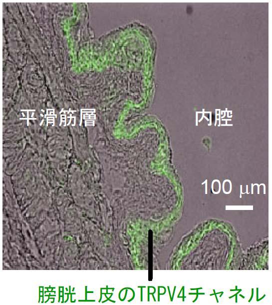 20090805_1.jpg