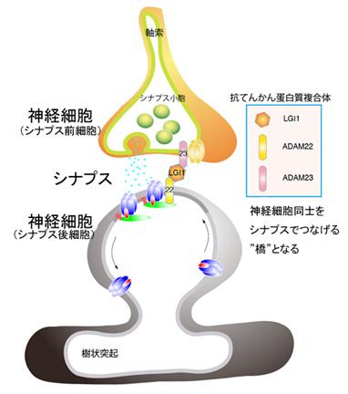 20100126_4.jpg