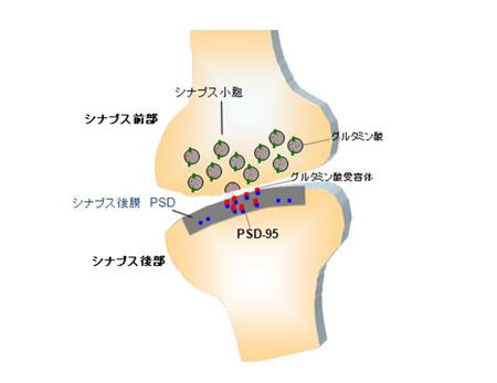 20130708FUKATA-1.jpg