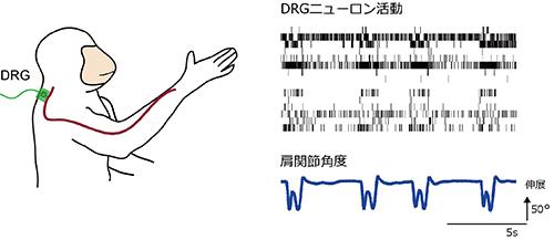 20140612Nishi-Ume1.jpg