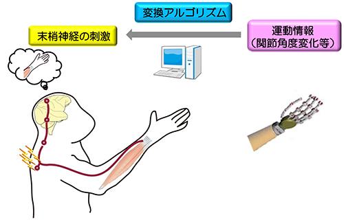 20140612Nishi-Ume3.jpg