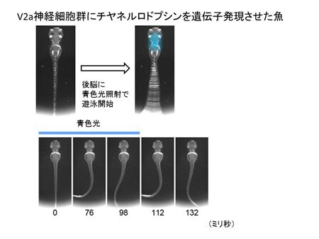 higashijima20130426-2.jpg