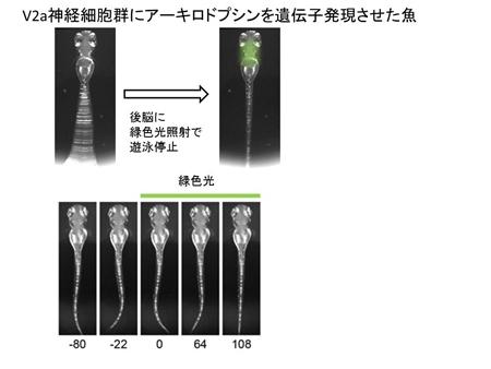 higashijima20130426-3.jpg