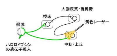 kaneda-1.jpg