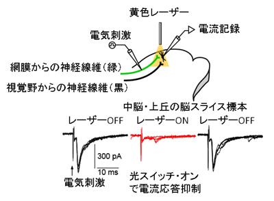 kaneda-3.jpg