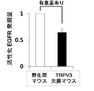 kyushu-4.jpg
