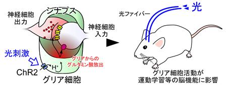matsui-press20141.23-1.jpg