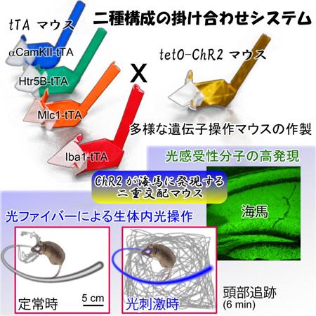 matsui-tanaka1.jpg