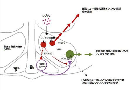 minokoshi-kennkyuhoukokuJP.jpg