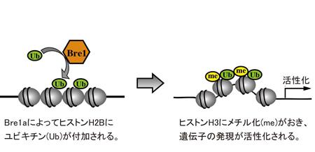 press20140225Ikenaka-1.jpg