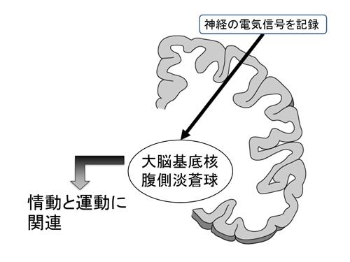 tachibana-1.jpg