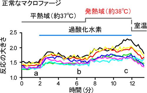 tominaga-meneki2-1.jpg