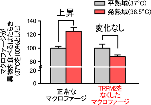 tominaga-meneki2-2.jpg