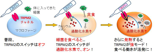 tominaga-meneki3.jpg