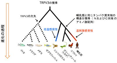 tominaga-zu3.jpg