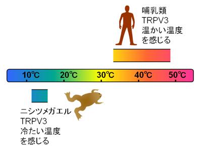 tominaga-zu4.jpg