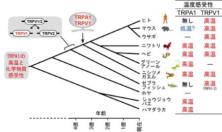 tominagaPress20140123-3.jpg