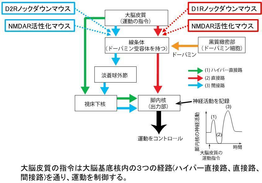 img_sasaoka2018.jpg