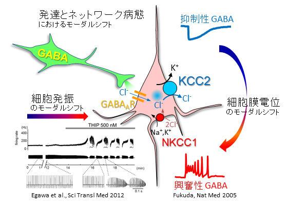 http://www.nips.ac.jp/oscillology/images/overview_a01.jpg
