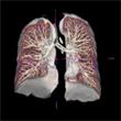 その2 肺