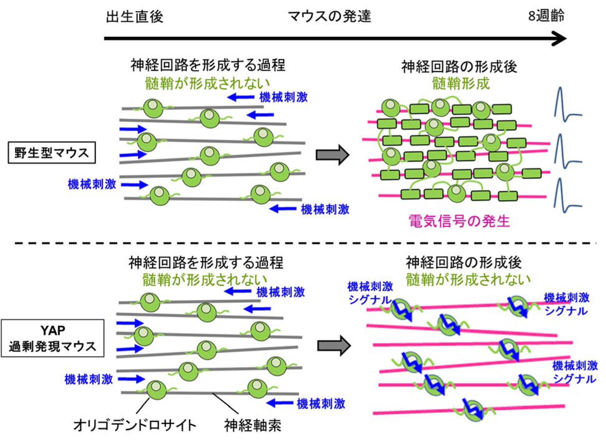 20161208shimizu-2.jpg