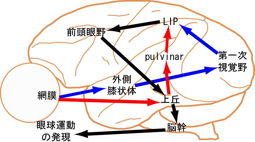 伊佐研HP-現在進行中の研究テー...