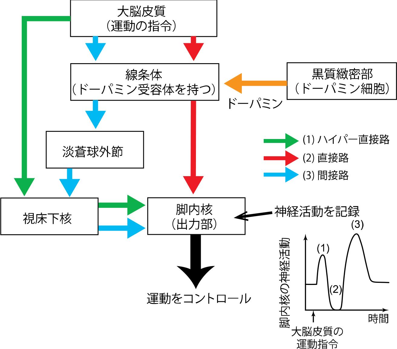 20151007chiken3.jpg
