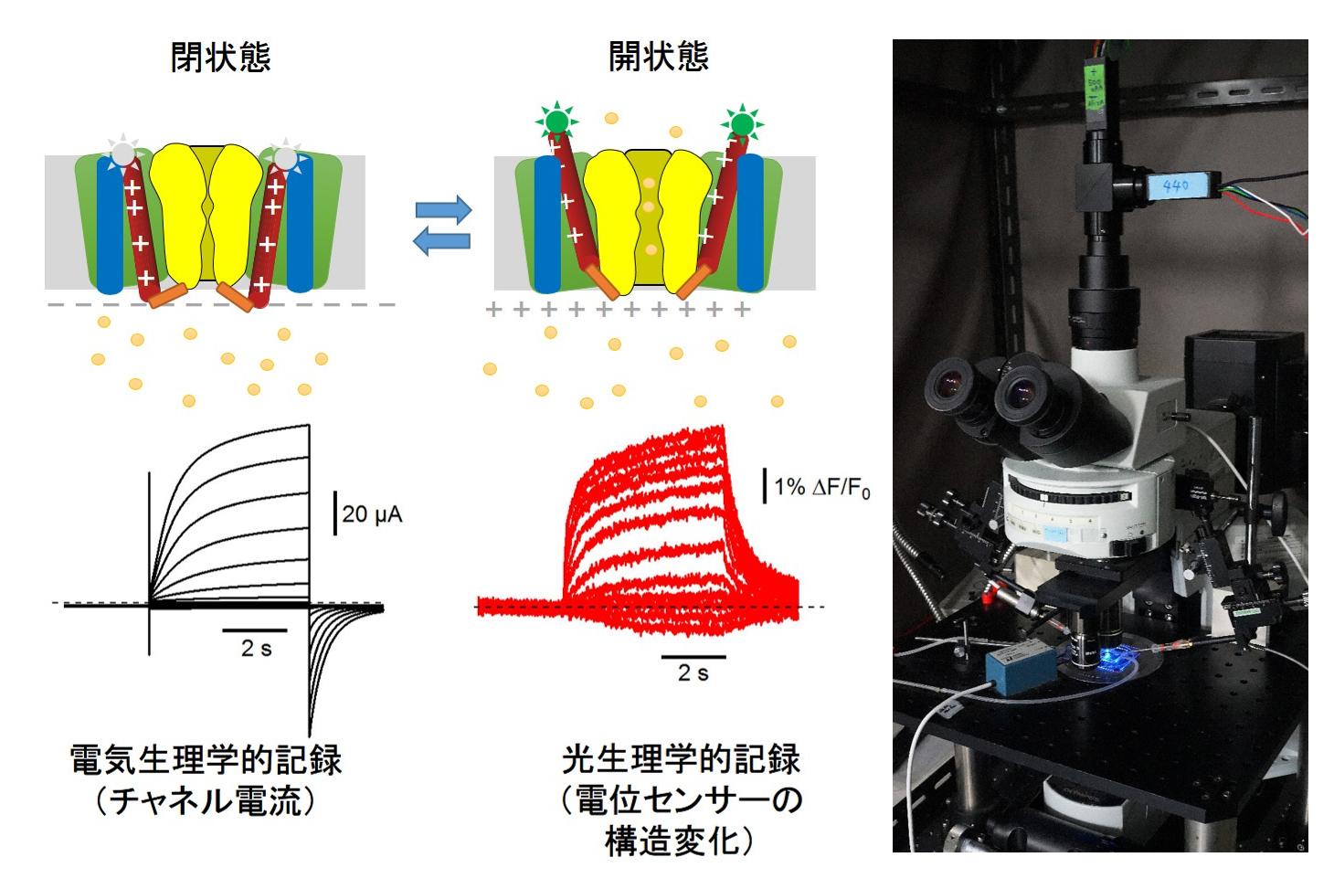kubo2019_jpn.jpg